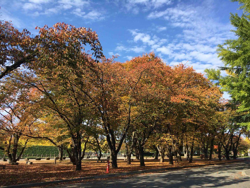 秋晴れのもと山形市内にある霞城公園と旧山形師範学校本館へ